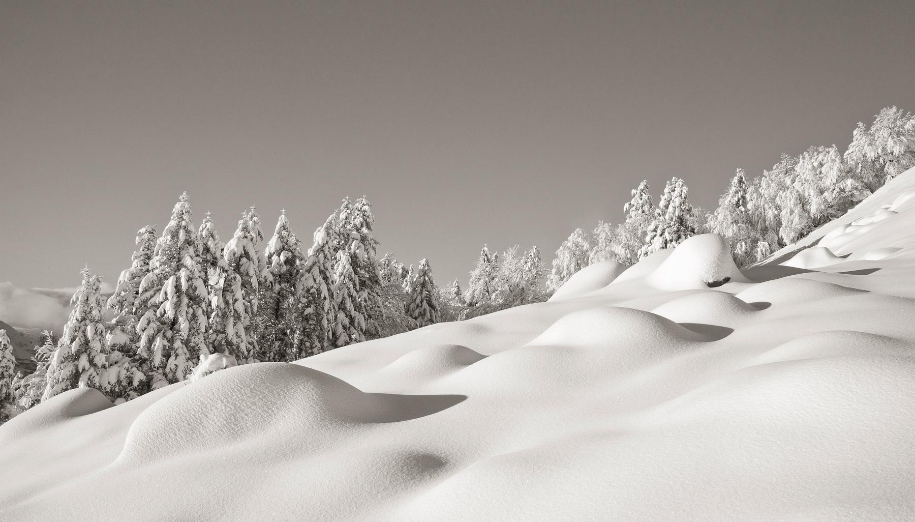Œufs de dragon sous la neige